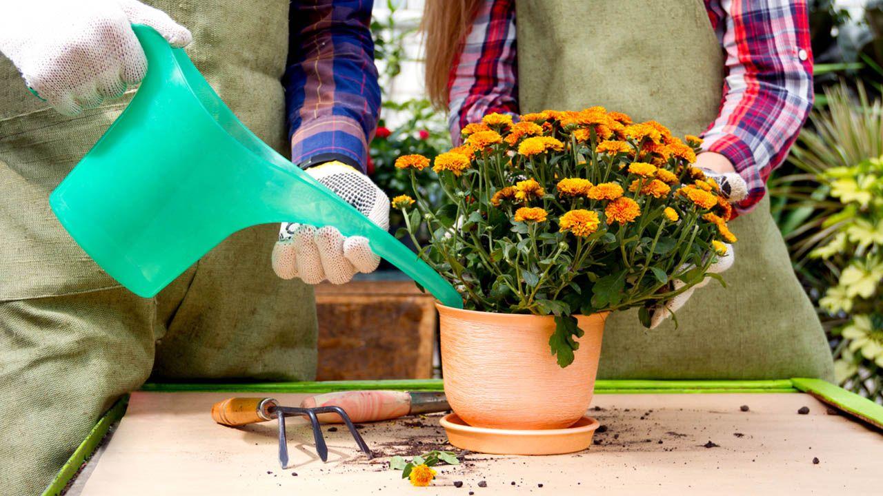Tareas de jardinería en abril (Hemisferio Sur)