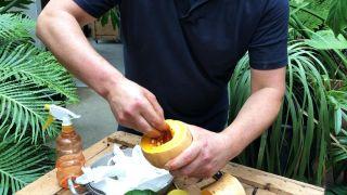 Germinar semillas en papel higiénico