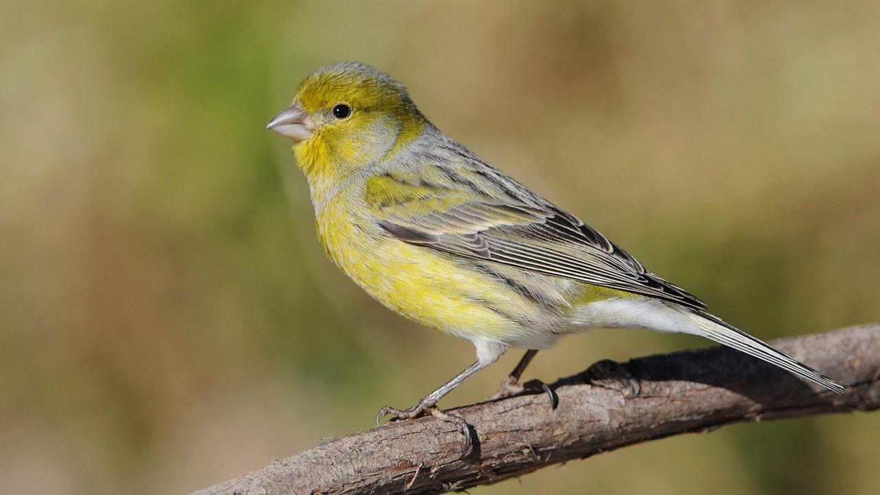Qué Hacer Si Encuentras Un Pájaro Herido