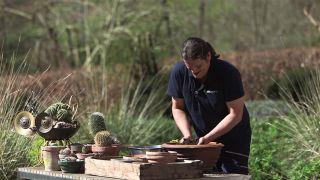 sustrato para cactus y plantas crasas