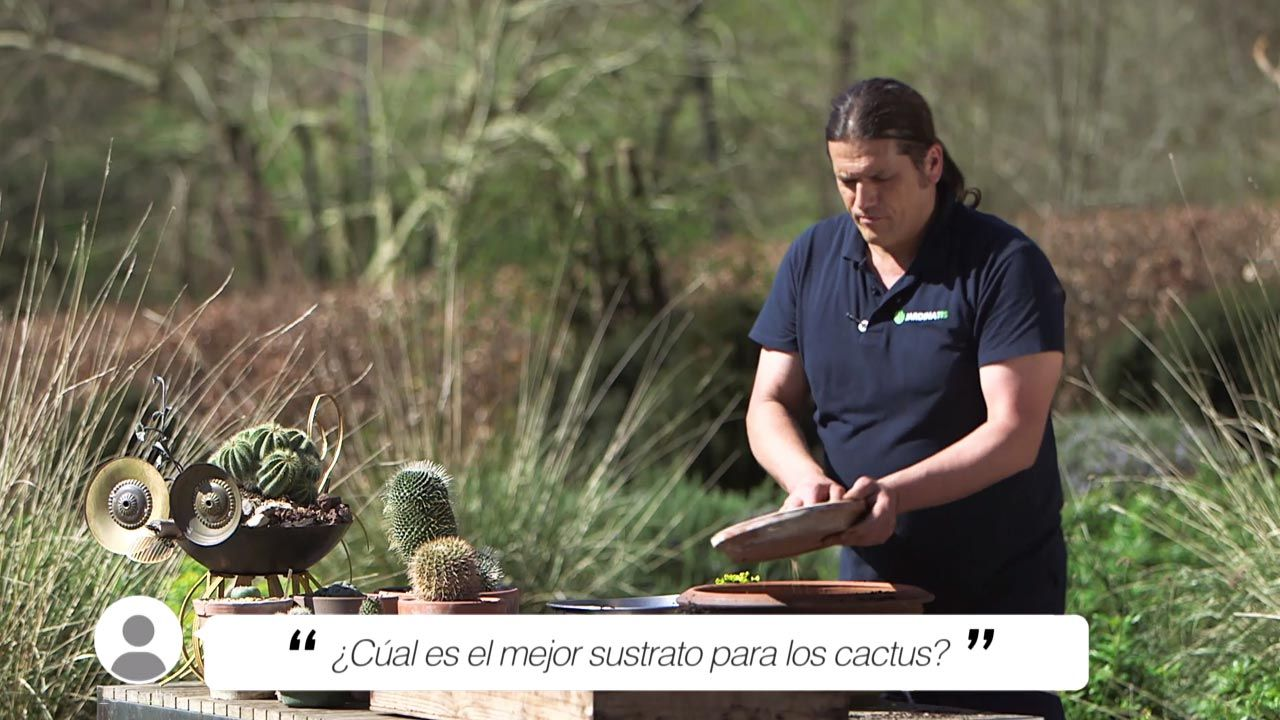 ¿Cuál es el mejor sustrato para cactus y plantas crasas?