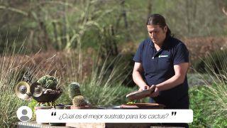 ¿Cuál es el mejor sustrato para los cactus y plantas crasas?