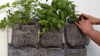 Jardín vertical con hierbas aromáticas