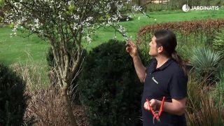 Poncirus trifoliata, cítrico resistente al frío