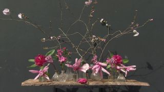 La Magnolia star wars: características y cuidados