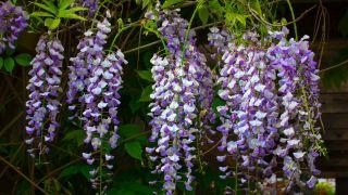 Composiciones florales de color morado