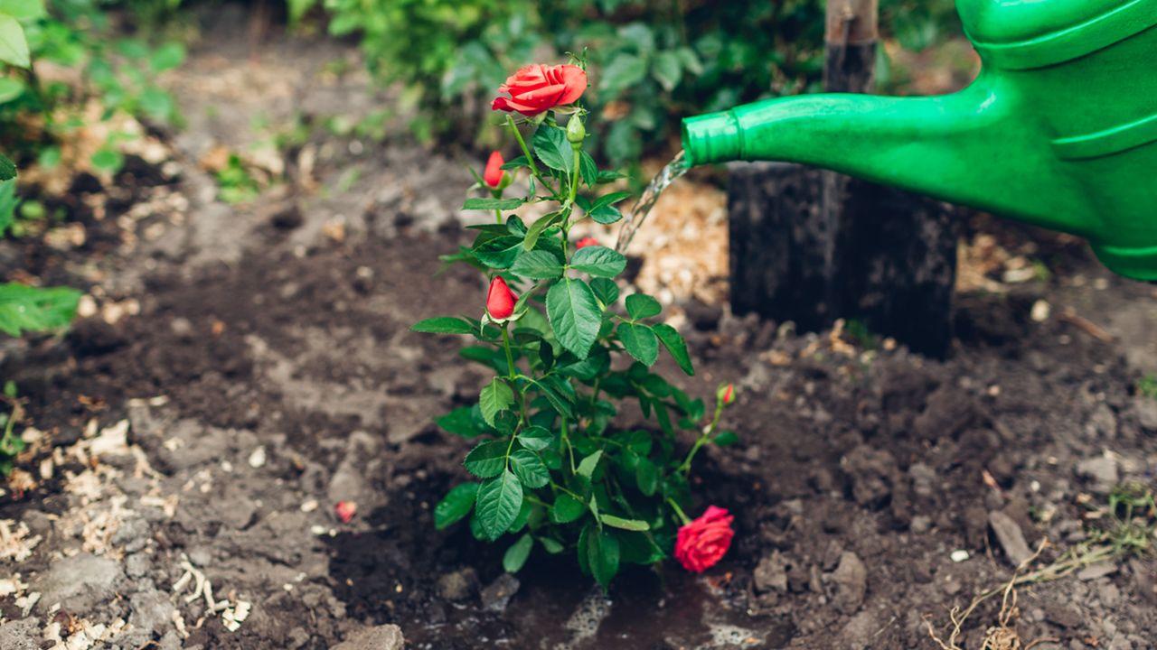 Tareas de jardinería en junio