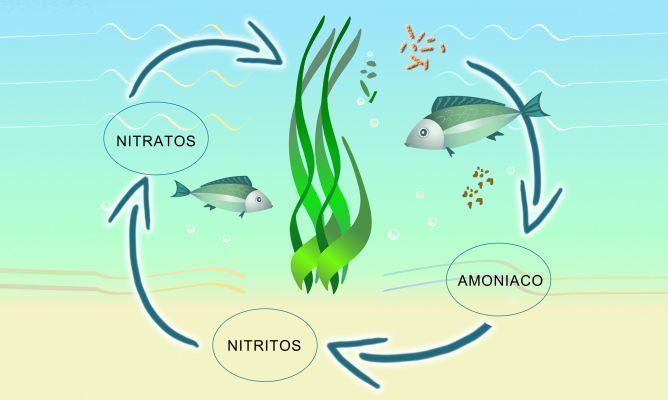 Ciclo biológico del acuario