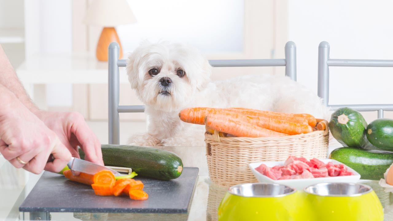 Perro frente a comida casera y sostenible