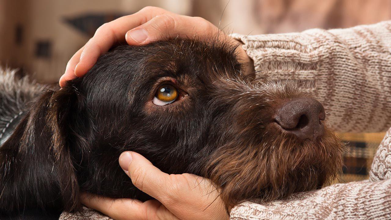5 consejos para ayudar a nuestra mascota en la nueva normalidad