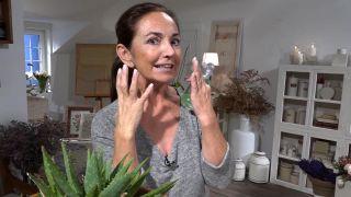 Aloe vera - Limpieza y cuidado facial