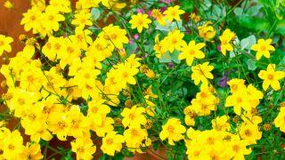 Plantas de verano