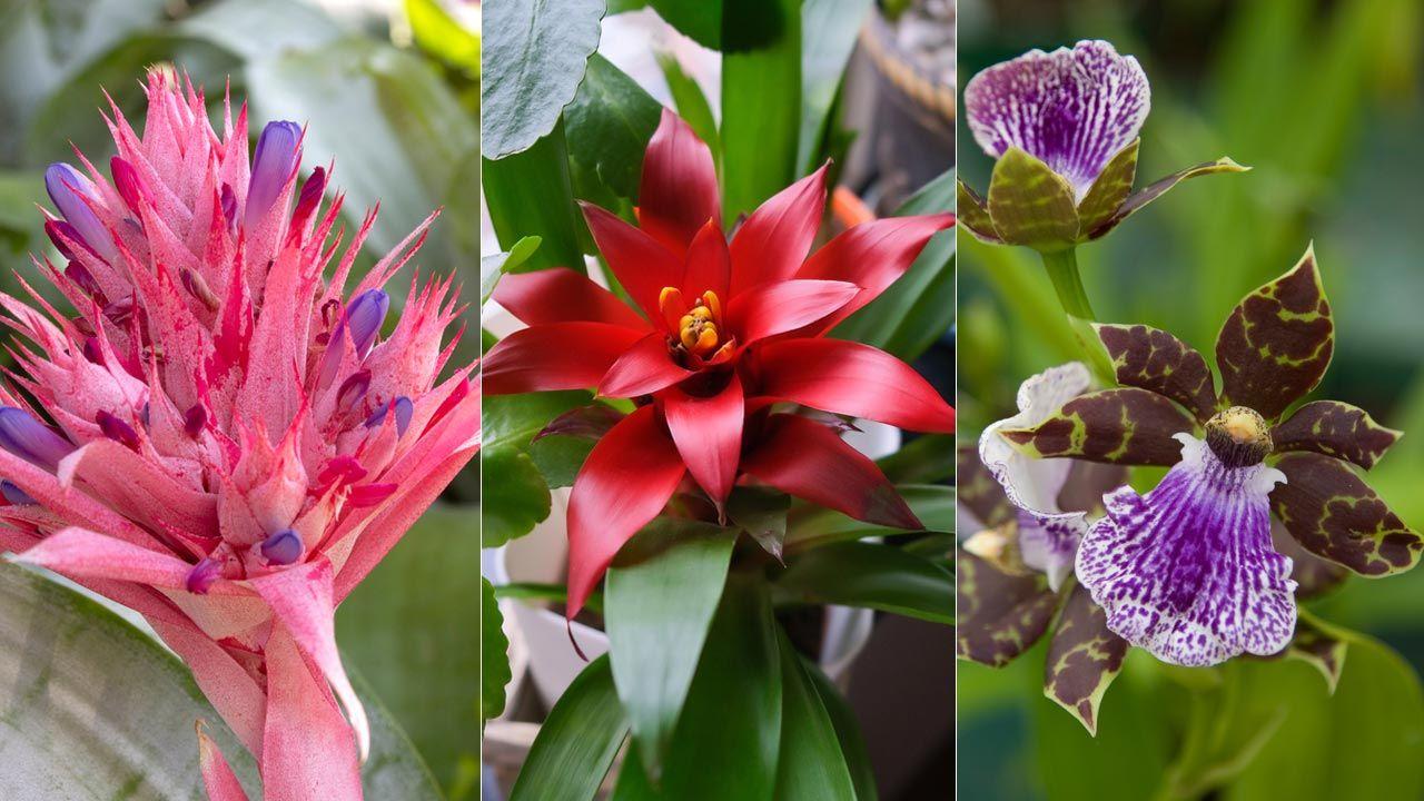 13 plantas con flores llamativas - Jardinatis