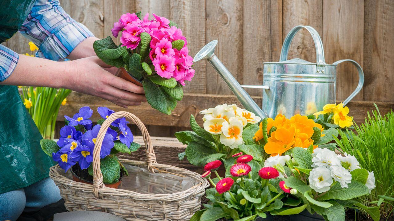 Jardineras con cajas de fruta