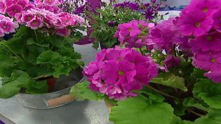 3 plantas con flores de principios de primavera