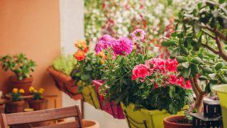 Plantas para decorar un balcón pequeño