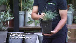 Composición de plantas grisáceas en recipientes de chapa galvanizada