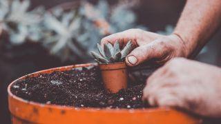 Composición de plantas crasas en puchero reciclado
