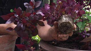 Composición floral granate con salvias