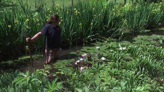 Cómo multiplicar nenúfares del estanque