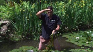 Cómo multiplicar nenúfares del estanque - Paso 3