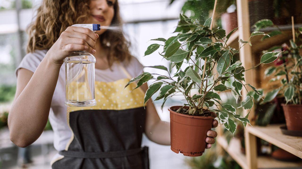 Tareas de jardinería en agosto