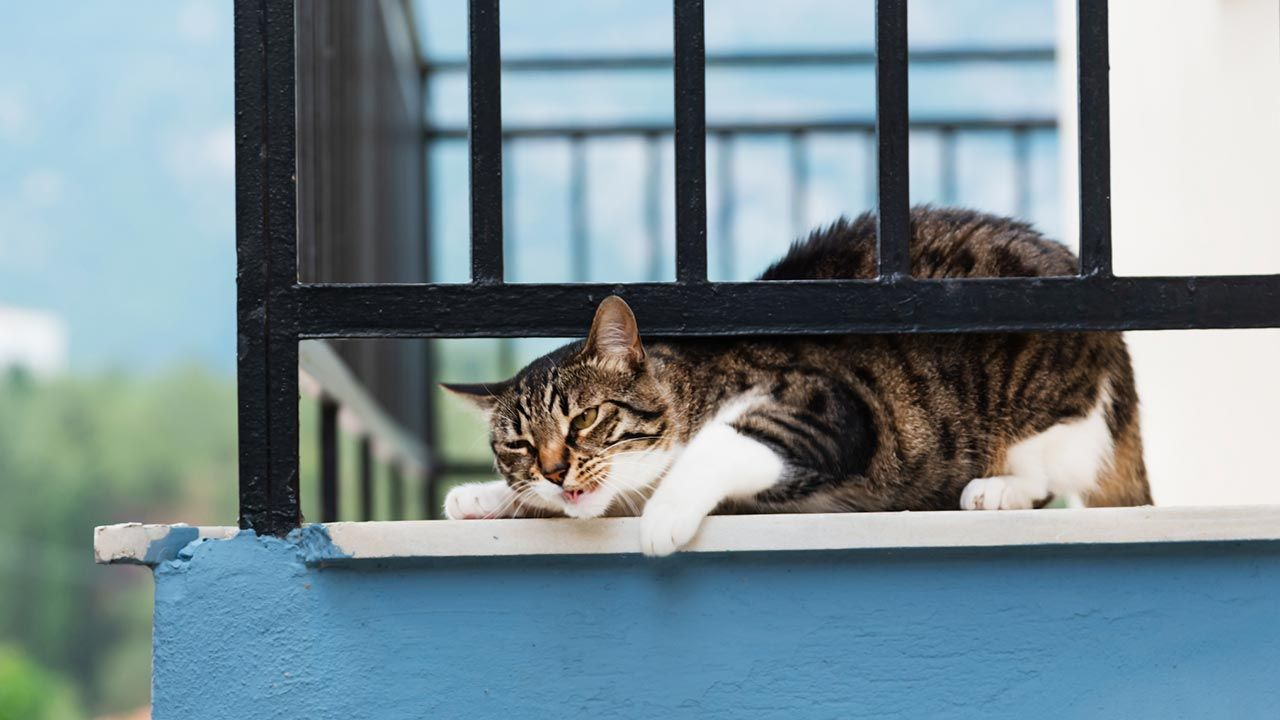 El Síndrome del gato paracaidista