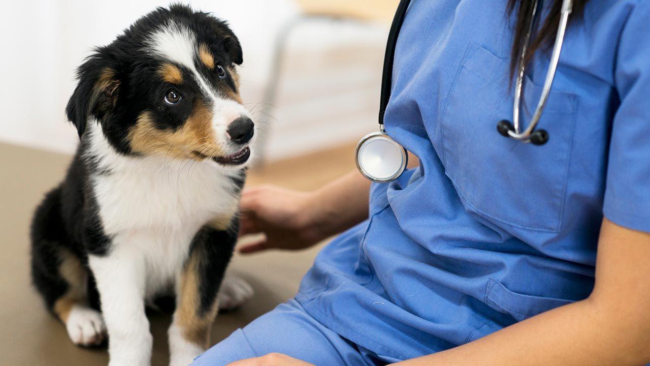 Cómo llevar al perro al veterinario sin morir en el intento