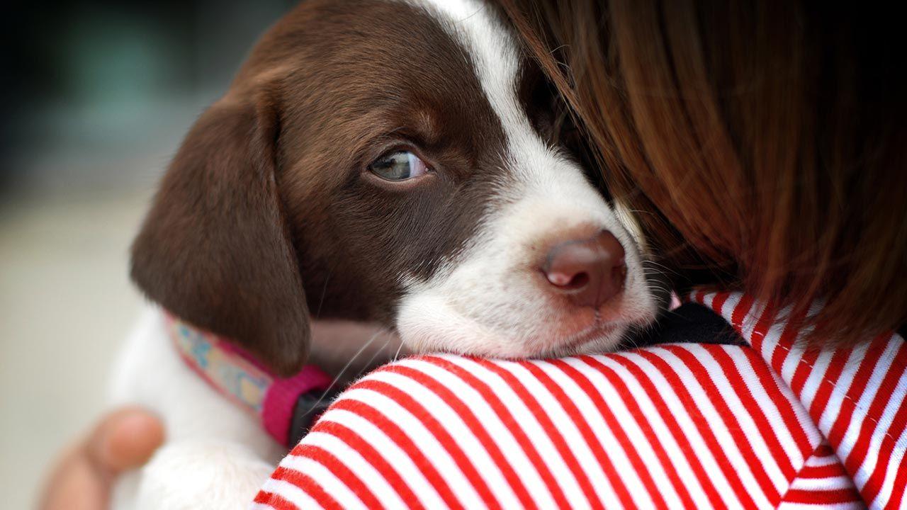 6 consejos para que los perros superen sus miedos