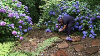 Jardín de hortensias de Iñigo Segurola