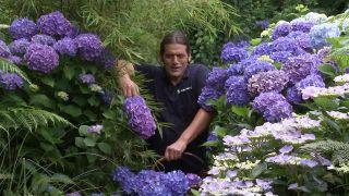 Jardín de hortensias de LUR Garden