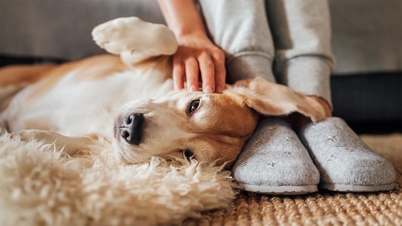6 consejos para evitar el cáncer en nuestro perro