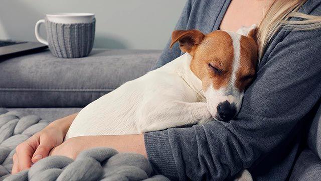 7 razones para adoptar un perro de mascota