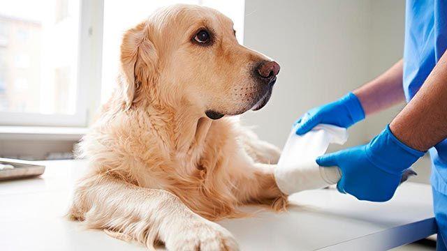 8 consejos para cuidar a tu mascota en otoño