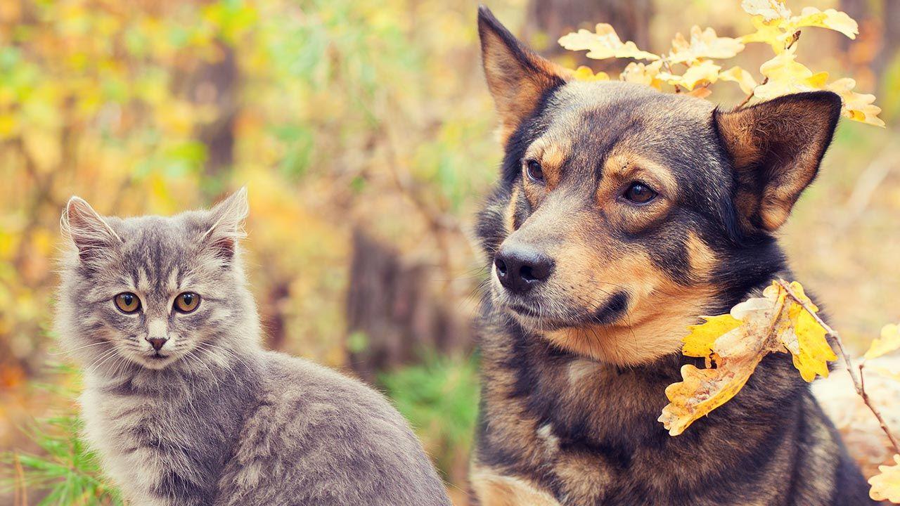 Perros y gatos en otoño