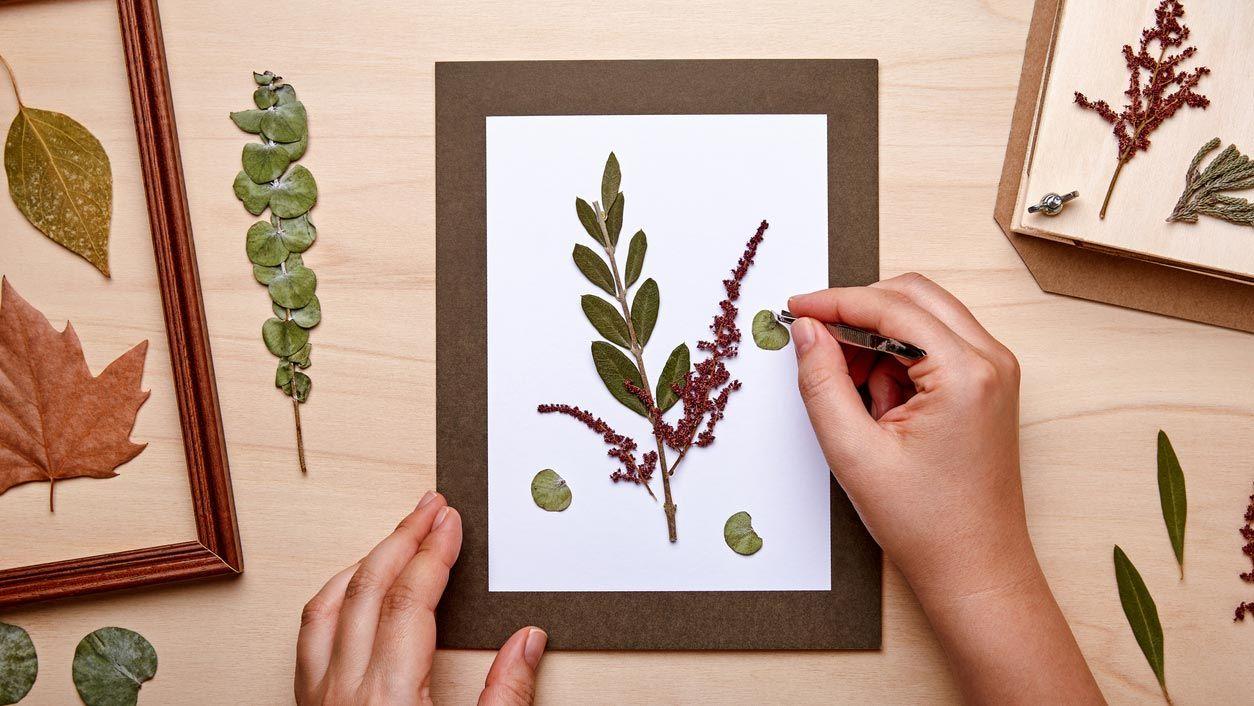 Hacer cuadros con flores y hojas secas