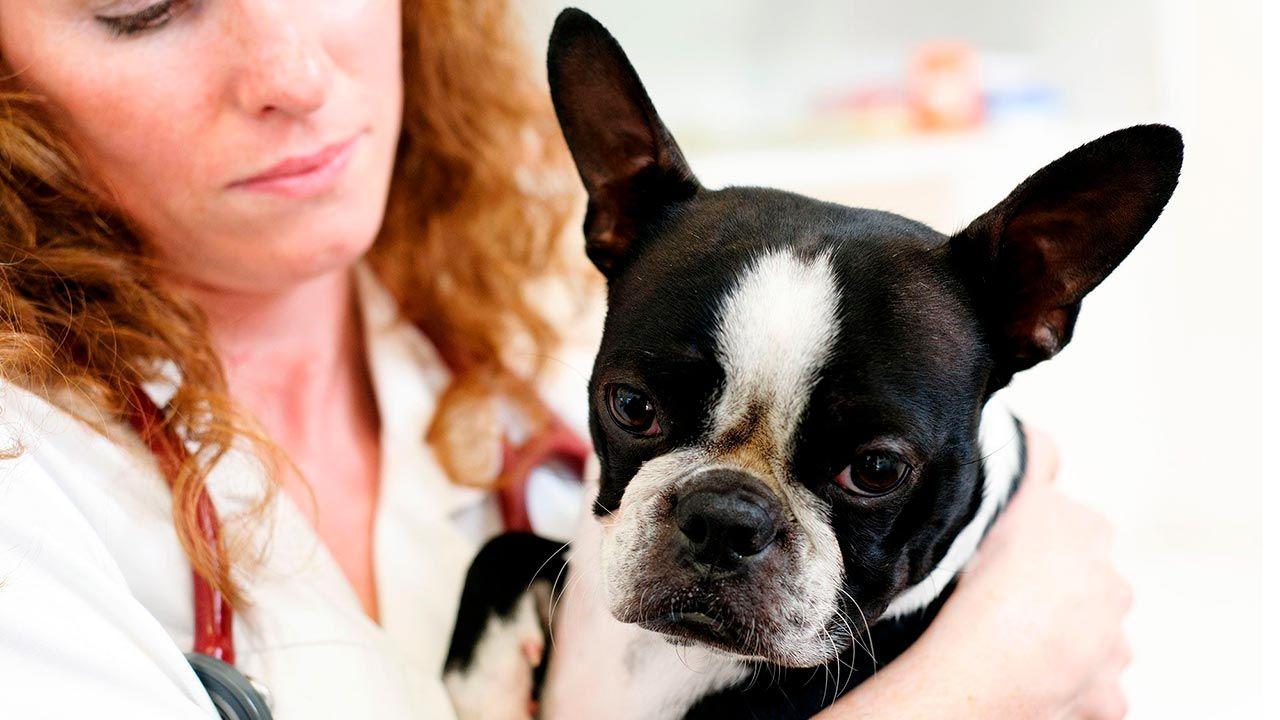 3 síntomas que puede tener un perro con problemas de corazón