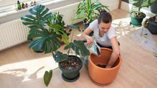 12 plantas de interior de hoja grande