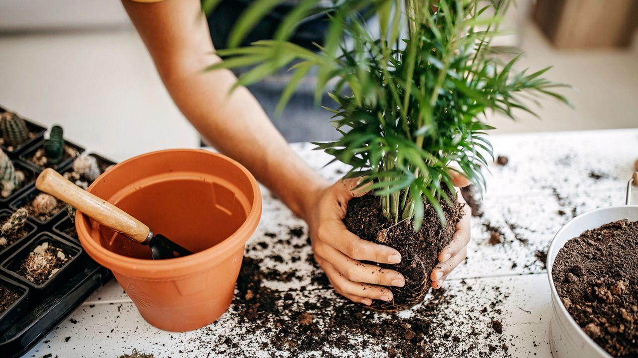Las plantas, un gran antídoto contra el estrés