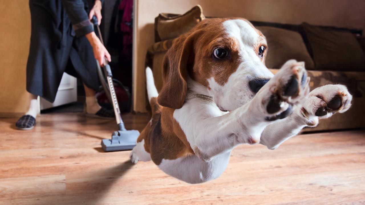 perro huyendo de su fobia (aspiradora)