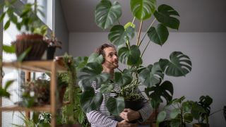 ¿Qué plantas escoger para tu hogar?