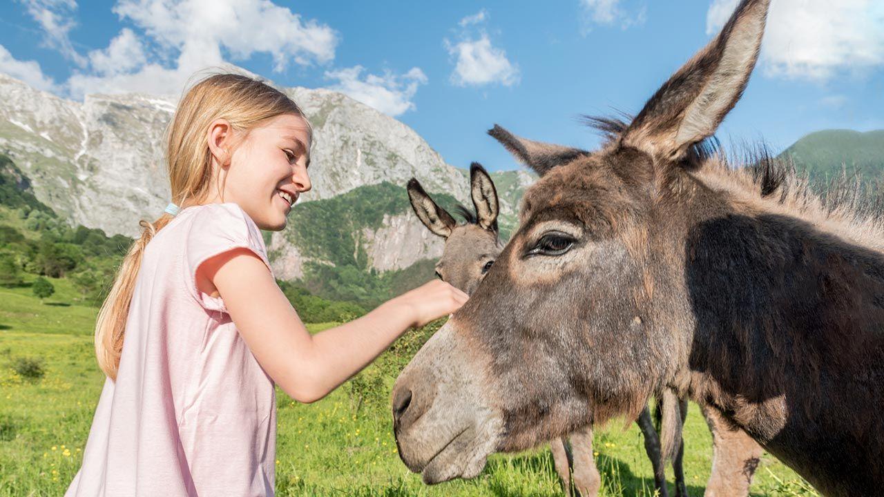 Terapia asistida con burros