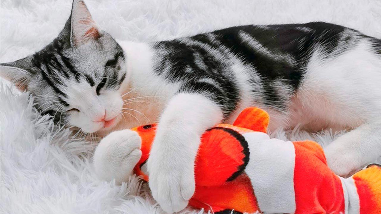 Gato abrazado a su peluche Nemo