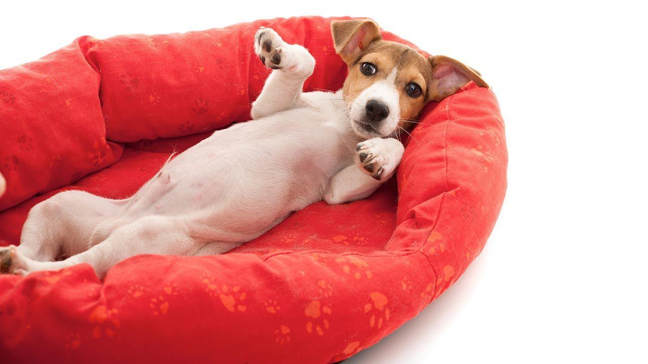 Cama cómoda para perro