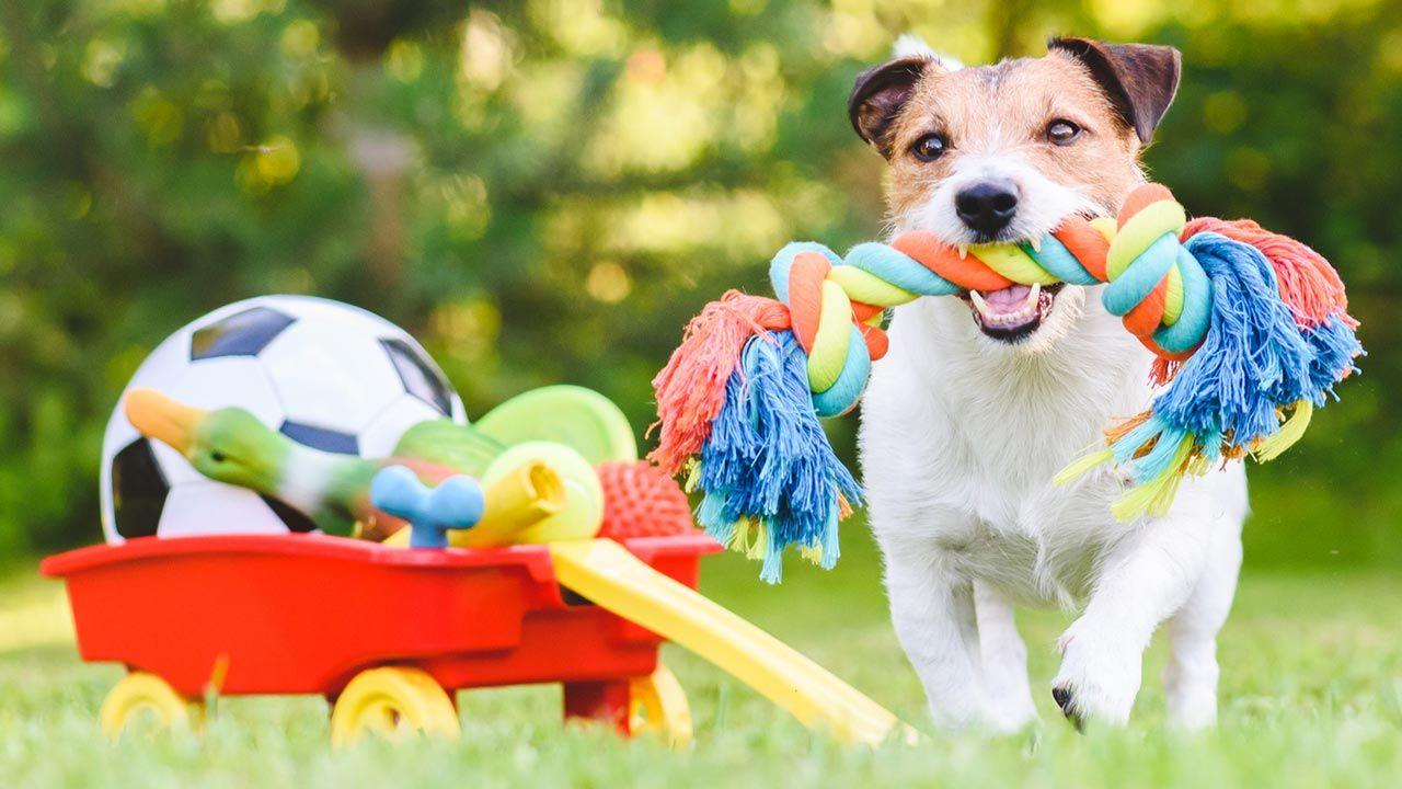 Perro feliz con sus juguetes