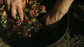 Parterre con arbustos otoñales