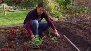 Cultivar habas, guisantes y ajos en otoño