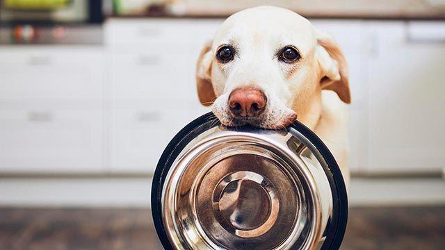 Perro sosteniendo su plato con la boca
