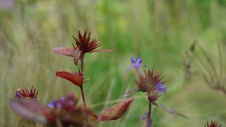Plantas de flores azules y lilas para zona de jardín