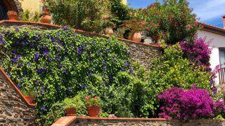 plantas para cubrir fachadas
